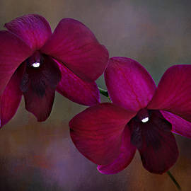 Maroon Orchid 2 by Isabela and Skender Cocoli