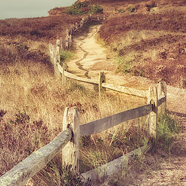 Martha's Vineyard Dunes by Joann Vitali