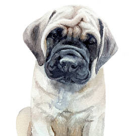 Mastiff pup by Emily Olson