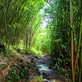 Maui Bamboo Forest by Anthony Jones