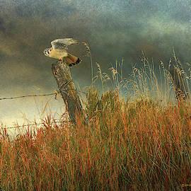 Meadow Kestrel by R christopher Vest