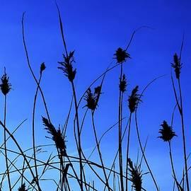 Meadow Lark Morning by John Glass