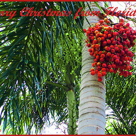 Merry Christmas From Florida by Susan Molnar