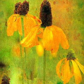 Mexican hat sunflower collection  by Geraldine Scull