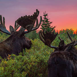 Mighty Giants Enjoy a Sunrise Breakfast by Gary Kochel