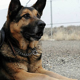 Military Dog Rexo by Robert G Kernodle