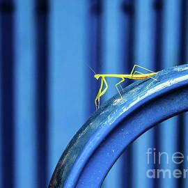 Minimalist Mantis by Broken Soldier