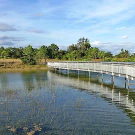 Miramar Pineland Park - Miramar, Florida  by Lyuba Filatova