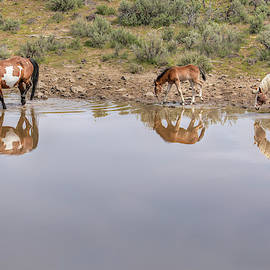 Mirror Images - South Steens Mustangs 0994 by Kristina Rinell