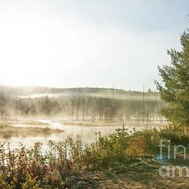 Misty at Mizzy by Nina Stavlund