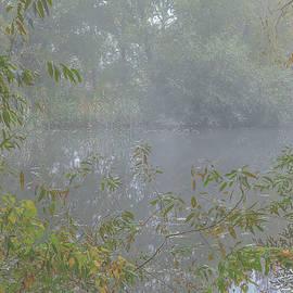 Misty creek #j2 by Leif Sohlman