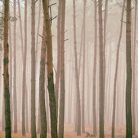 Misty Pines. Horytsya, 2018. by Andriy Maykovskyi