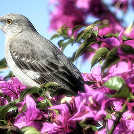Mockingbird in the Bougainvillea by Donna Kennedy