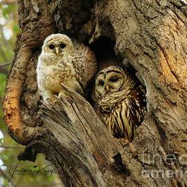 Mom and her baby owl by Heather King