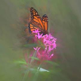 Monarch Butterfly On A Pink Flower by Pamela Walton