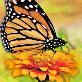 Monarch Butterfly On Flower by Jeff Breiman