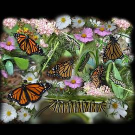 Monarch Collage by Aimee L Maher ALM GALLERY