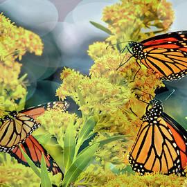 Monarch migration series by Geraldine Scull