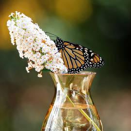 Monarch Still Life by Marilyn De Block