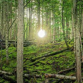 Monashee Forest Sunset