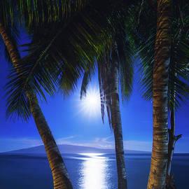 Moonlight Palms by Tyler Rooke