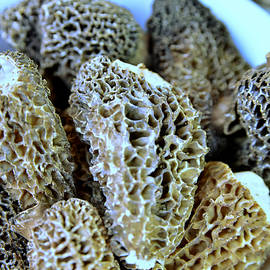 Morel Mushrooms by Kae Cheatham