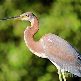 Morning Bird by Gary Richards