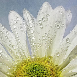 Morning Dew  by Sandi Kroll