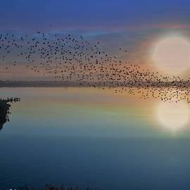Morning Flight by John R Williams