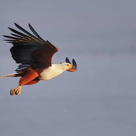 Morning flight by Murray Rudd