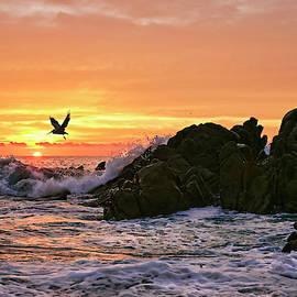 Morning Flight Serenity by Marcia Colelli