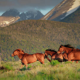 Morning gallop by Murray Rudd