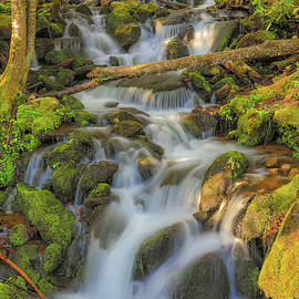 Morning Light On Smoky Mountain Waterfall by Dan Sproul