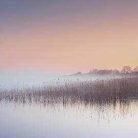 Morning mist by One Art Dan Szczesny