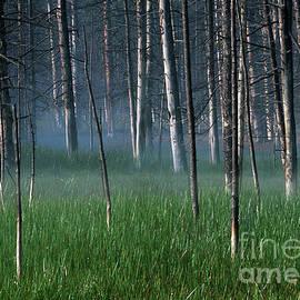 Morning Mist in Yellowstone by Sandra Bronstein