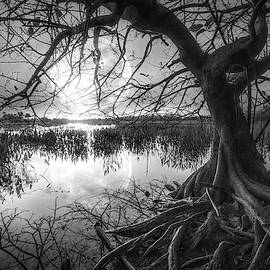 Morning Mystery in Black and White by Debra and Dave Vanderlaan