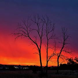 Morning Sunrise Surprise by Lynn Hopwood