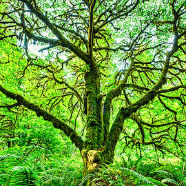 Moss Covered Maple #2 by Stuart Litoff