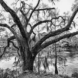 Mossy Oak on the Suwanee by Susan Hope Finley