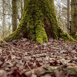 Mossy Tree by Scott Lyons