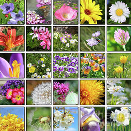 Most famous flowers by Gregory DUBUS