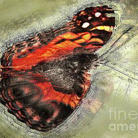 Moth by Anthony Ellis