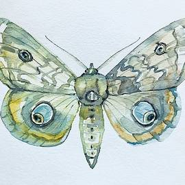 Moth by Luisa Millicent