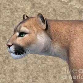 Mountain Lion by Walter Colvin