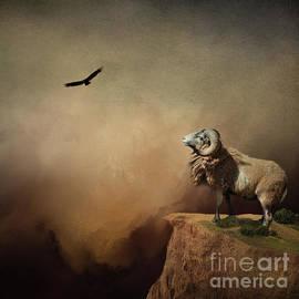 Mountain Ram by Kathy Kelly