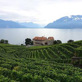 Mountain Vistas and Vineyards  by Patricia Caron