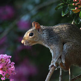 Mr. Squirrel Looking So Cute And Innocent by Trina Ansel