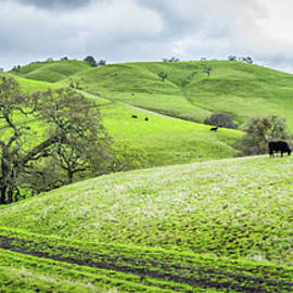 Mt. Diablo Spring Hillside by Scott McGuire