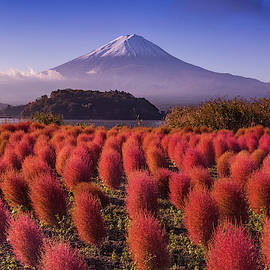 Mt. Fuji Fall  by Alinna Lee