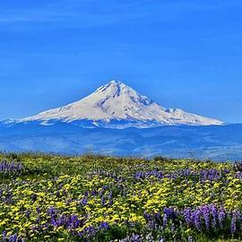 Mt. Hood and Wildflowers by Dana Hardy